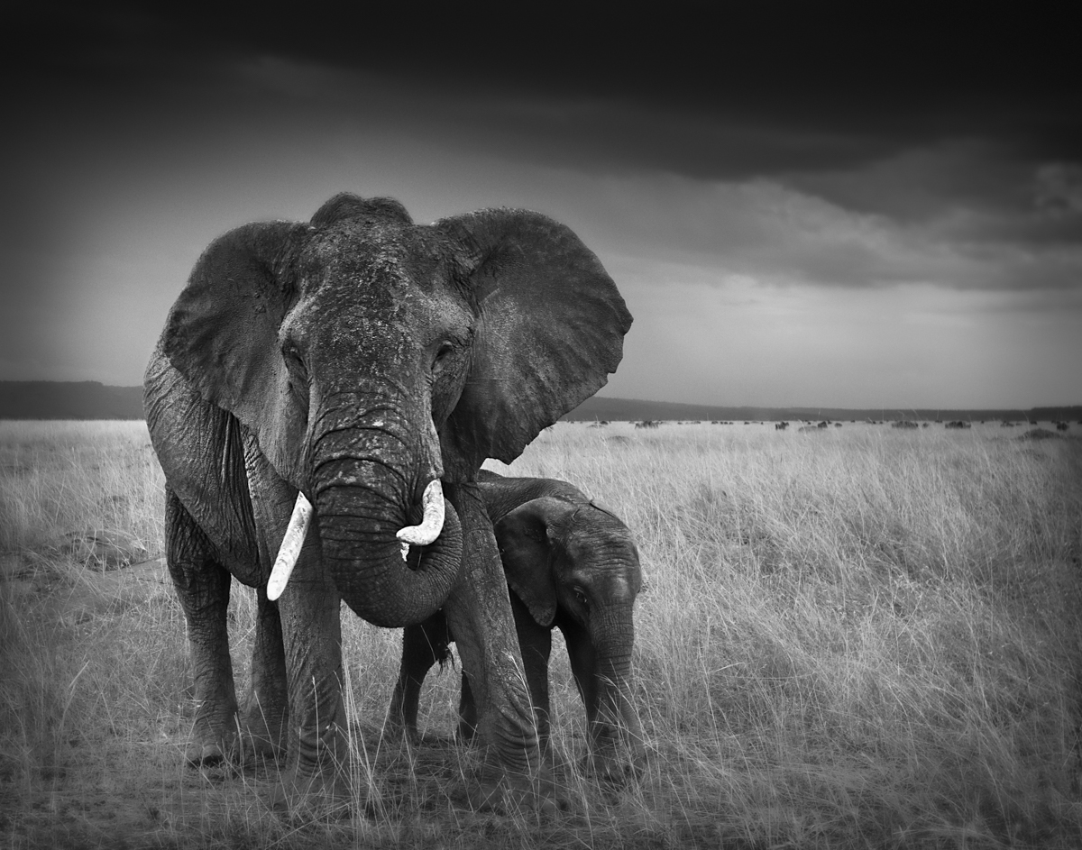 Elephant Mom and Baby - Maasai Mara, Kenya