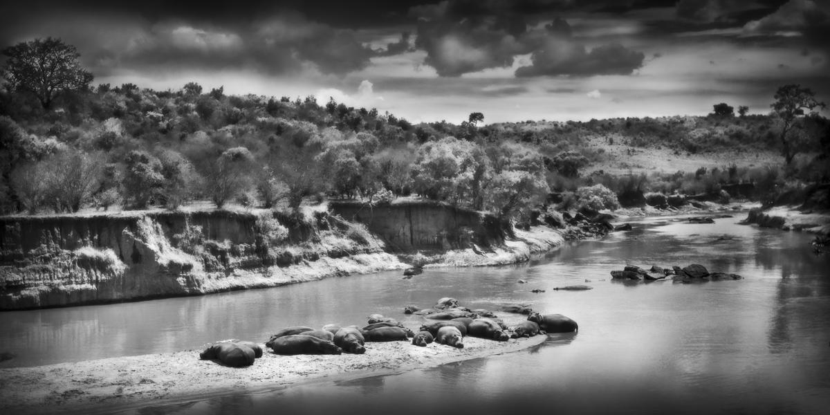 Hippo Island - Maasai Mara, Kenya